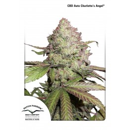CBD Auto Charlotte's Angel®