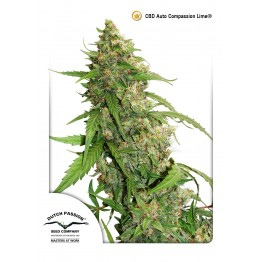 CBD Auto Compassion Lime®