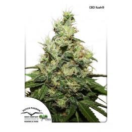 CBD Kush ®