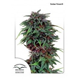 Durban Poison ®
