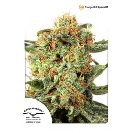 Orange Hill Special ®