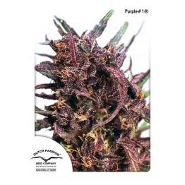 Purple#1 ®