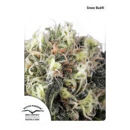 Snow Bud®
